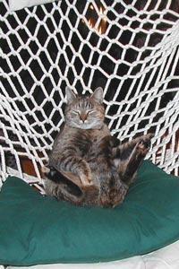 Cobble cat