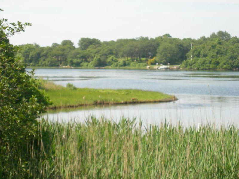 Green pond view